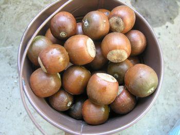 Kunugi